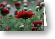 Floral Greeting Cards - Blood Mums Greeting Card by Lynn-Marie Gildersleeve