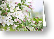 Pink Flower Branch Greeting Cards - Blooming apple tree Greeting Card by Elena Elisseeva