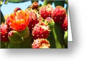 Desert Landscapes Greeting Cards - Blooming cactus Close-Up Greeting Card by Amy Vangsgard