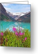 Fireweed Greeting Cards - Blooming Fireweed at Lakeside  Greeting Card by George Oze