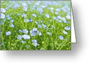 Flora Greeting Cards - Blooming flax Greeting Card by Elena Elisseeva