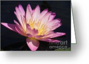 Pink Flower Prints Greeting Cards - Blooming with Beauty Greeting Card by Chrisann Ellis