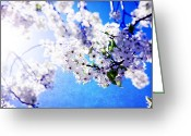 Bradford Greeting Cards - Blooms of beauty Greeting Card by Toni Hopper