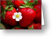 Photography Tk Designs Greeting Cards - Blossom Among Strawberries Greeting Card by Tracie Kaska