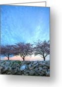 Potomac River Greeting Cards - Blossoms Greeting Card by JC Findley