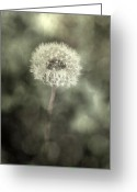 Puffy Greeting Cards - Blowball Greeting Card by Joana Kruse