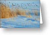 Snow Scenes Greeting Cards - Blowing in the Wind Greeting Card by Aimee L Maher