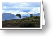 Gaelic Prints Greeting Cards Greeting Cards - Blown Color Greeting Card by Paul  Mealey