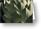 Green Artichoke Greeting Cards - Blue Aloe Greeting Card by Ellen Henneke