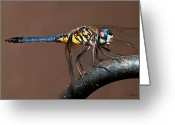 Christopher Holmes Photography Greeting Cards - Blue and Gold Dragonfly Greeting Card by Christopher Holmes