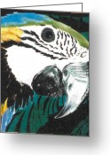 Wildlife Art Ceramics Greeting Cards - Blue and Gold Macaw Greeting Card by Dy Witt