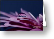 Daisies Photos Greeting Cards - Blue and purple Greeting Card by Kristin Kreet