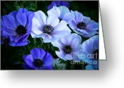 Blue Petals Greeting Cards - Blue and White Greeting Card by Julie Palencia