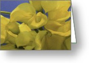 Flower Show Greeting Cards - Blue and Yellow Greeting Card by Trish Tritz