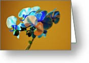 Designers Choice Photo Greeting Cards - Blue Azure III Greeting Card by Don Wright