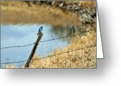 Mario Brenes Simon Greeting Cards - Blue Bird Greeting Card by Mario Brenes Simon