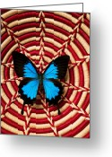 Migration Greeting Cards - Blue black butterfly in basket Greeting Card by Garry Gay