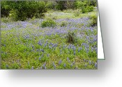 Blue Bonnets Greeting Cards - Blue Bonnet Landscape Greeting Card by Linda Phelps