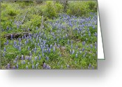 Blue Bonnets Greeting Cards - Blue Bonnets and Old Wood Greeting Card by Linda Phelps