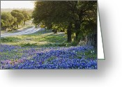 Blue Bonnets Greeting Cards - Blue Bonnets in Field Near Road Greeting Card by Jeremy Woodhouse