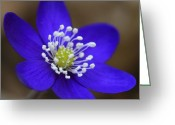 Nice Day Greeting Cards - Blue buttercup Greeting Card by Romeo Koitmae