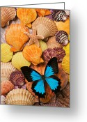 Insects Greeting Cards - Blue butterfly and sea shells Greeting Card by Garry Gay