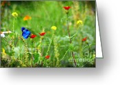 John Kolenberg Greeting Cards - Blue Butterfly In Meadow Greeting Card by John  Kolenberg