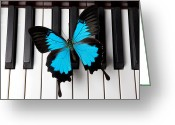 Pianos Greeting Cards - Blue butterfly on piano keys Greeting Card by Garry Gay