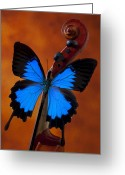 Musical Greeting Cards - Blue Butterfly On Violin Greeting Card by Garry Gay