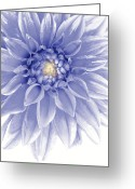 Flowery Greeting Cards - Blue Dahlia Greeting Card by Al Hurley