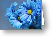 Wayne Greeting Cards - Blue Daisies Greeting Card by Jody Trappe Photography