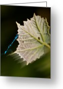 Lake Park Greeting Cards - Blue Damsel on Leaf Greeting Card by DigiArt Diaries by Vicky Browning