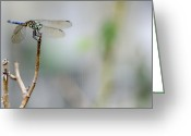 Biologist Greeting Cards - Blue Dragonfly Greeting Card by Heather Applegate
