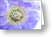 Macro Greeting Cards - Blue dream Greeting Card by Kristin Kreet