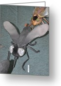 Amimal Greeting Cards - Blue Eyed Black Fly Greeting Card by Michael Jude Russo