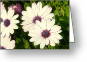 Beautiful Flowers Greeting Cards - Blue eyed daisies Greeting Card by Anthony Citro