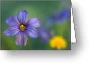 Flowers Greeting Cards Greeting Cards - Blue Eyed Grass Greeting Card by Kathy Yates