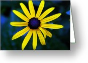 Flower Greeting Cards - Blue Eyes Greeting Card by Susanne Van Hulst