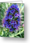 Flower Buds Greeting Cards - Blue Flowers Greeting Card by Amy Fose