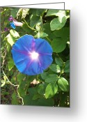 Phuong Tu Greeting Cards - Blue Flowers  Greeting Card by Phuong Tu