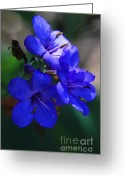 Tiny Flowers Greeting Cards - Blue for the Sun Greeting Card by Mandy Shupp