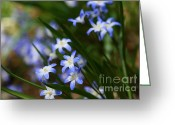 Wildflower Photograph Greeting Cards - Blue For You Greeting Card by Neal  Eslinger