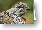 Telephoto Greeting Cards - Blue Grouse Hen 2 Greeting Card by Larry Ricker