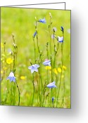 Thin Greeting Cards - Blue harebells wildflowers Greeting Card by Elena Elisseeva