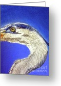 Sea Life Pastels Greeting Cards - Blue Heron close-up Greeting Card by Teresa Vecere