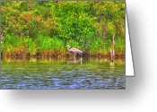 Tree Artwork Mixed Media Greeting Cards - Blue Heron-In the swamp-20 Greeting Card by Robert Pearson