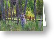 Heron.birds Greeting Cards - Blue Heron-In the swamp Greeting Card by Robert Pearson