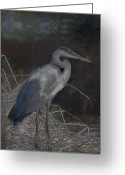 White And Purple Wings Greeting Cards - Blue Heron Painting  Greeting Card by Don  Wright