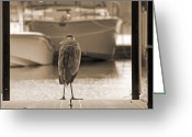 Nashville Greeting Cards - Blue Heron Sepia Greeting Card by Steven  Michael