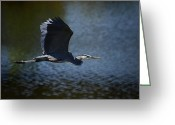 Heron.birds Greeting Cards - Blue Heron Skies  Greeting Card by Saija  Lehtonen